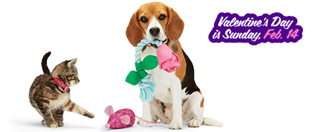 15% off Valentine's Day dog and cat toys