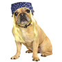 Rubies Bandana Hair  Pet Costume